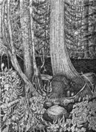 darrell ross, forest trees